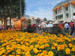 Flowers Disneyland Fall