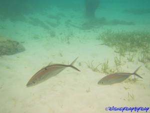 Castaway Cay Underwater 11