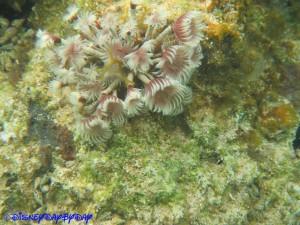 Castaway Cay Underwater 16