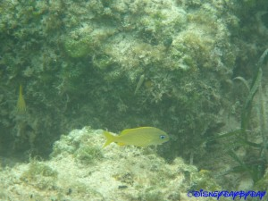 Castaway Cay Underwater 19