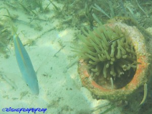 Castaway Cay Underwater 20