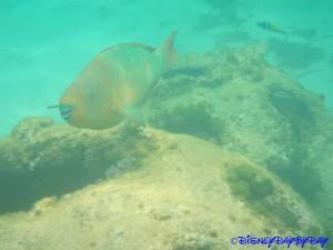 Castaway Cay Underwater 21