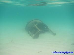 Castaway Cay Underwater 29