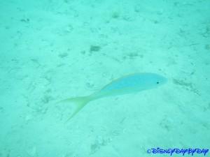 Castaway Cay Underwater 4