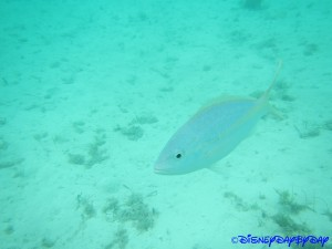 Castaway Cay Underwater 5