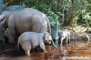 Magic Kingdom - Jungle Cruise - 2