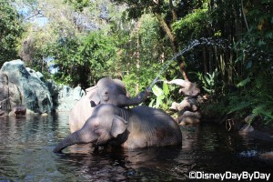 Magic Kingdom - Jungle Cruise - 3