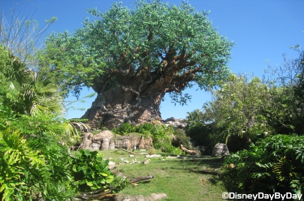 WDW – Animal Kingdom