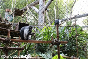 Animal Kingdom - Pangani Forest Exploration Trail 10