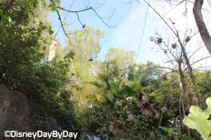 Animal Kingdom - Pangani Forest Exploration Trail 19