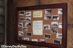 Animal Kingdom - Pangani Forest Exploration Trail 20