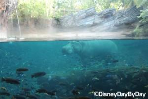 Animal Kingdom - Pangani Forest Exploration Trail 23