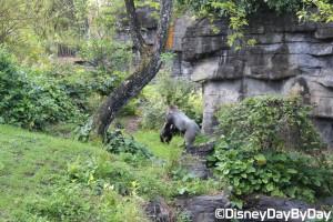 Animal Kingdom - Pangani Forest Exploration Trail 27