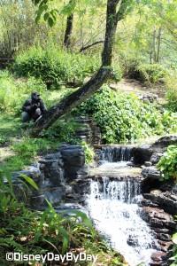 Animal Kingdom - Pangani Forest Exploration Trail 28