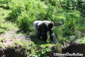 Animal Kingdom - Pangani Forest Exploration Trail 29
