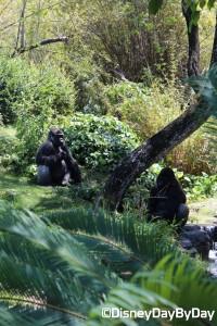 Animal Kingdom - Pangani Forest Exploration Trail 30
