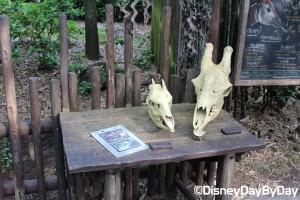 Animal Kingdom - Pangani Forest Exploration Trail 4