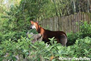 Animal Kingdom - Pangani Forest Exploration Trail 5