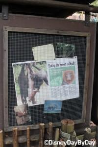 Animal Kingdom - Pangani Forest Exploration Trail 8